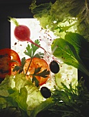 Various salad ingredients (radishes, tomatoes, lettuce)