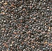 Black sesame (filling the picture)