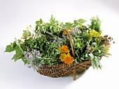 Viele verschiedene Gartenkräuter in einem Korb