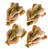 Four Raw Chickens