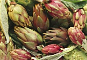 Long green and purple artichokes (filling the picture)