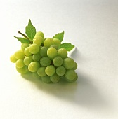Bunch of Green Grapes with Water Droplets