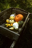 Various types of squash in a wooden wheelbarrow