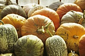 Various types of squash in front of a window