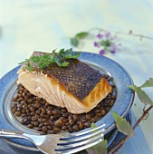 Grilled salmon on lentils