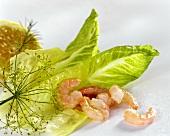 Shrimps, lettuce leaves, dill and lemon