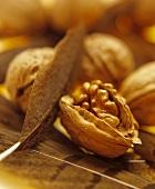 Walnuts on walnut leaves