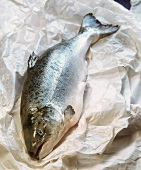 Whole salmon trout on paper