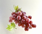 A Bunch of Red Grapes with Drops of Water