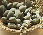 Almonds in basket with sprigs of almond blossom