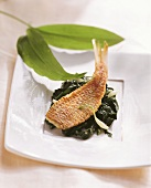 Fried fish fillet on ramsons (wild garlic) spinach