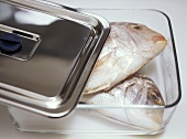 Keeping fish fresh in a glass container