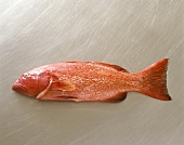 Red coral trout