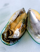 New Zealand green mussel, opened