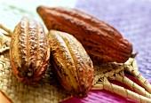 Kakaofrüchte auf Bambusmatte