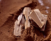 Pieces of chocolate on cocoa powder