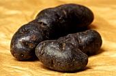 Truffle potatoes (variety: Violette noir)