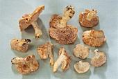 Fresh wood hedgehog mushrooms