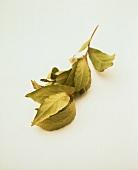 Sprig of dried bay leaves