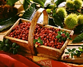 Cranberries in wooden basket in front of chestnuts