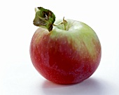 Red and green apple with stalk and leaf