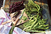 Various types of green beans