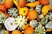 Various ornamental and edible squashes