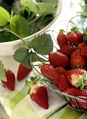Fresh strawberries in basket and strawberry leaves