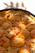 Freshly baked apricot tart