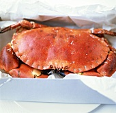 Crab in box