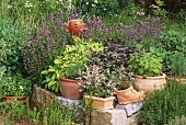 Herb garden with terracotta head