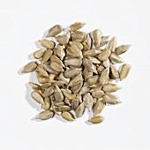 A heap of sunflower seeds