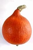 Orange Hokkaido pumpkin