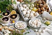 Still life with various types of mushrooms