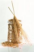 Barleycorns in cellophane bag and ears of barley