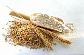 Grains of rye, ear of rye and rye flour