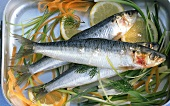 Sardines with vegetables and lemons in roasting tin