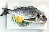 Gilthead bream with lemon and dill