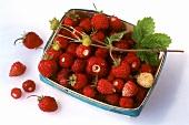 Wild strawberries in chip basket