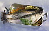 Fresh brook trout in roasting tin