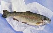Fresh salmon trout on paper