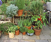 Various herbs and vegetable plants on terrace