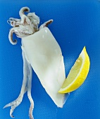 Calamar mit Zitronenschnitz