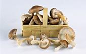 Fresh shiitake mushrooms in chip basket