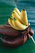 Yellow and red bananas