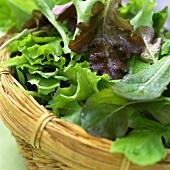 Fresh lettuce leaves in basket