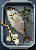Redfish with garlic and herbs in roasting tin