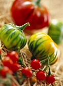 Stripes aubergines and cherry tomatoes on straw