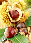 Sweet chestnuts with shells