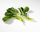 Choy sum (tropical brassica)